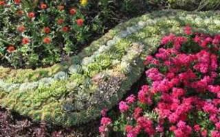 Схемы клумб из многолетников с описанием цветов