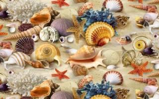 Панно из морских ракушек своими руками