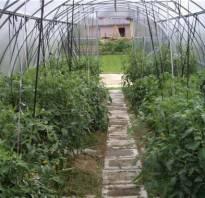 Подвязка помидор в теплице из поликарбоната