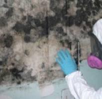 Средства от плесени и грибка на стенах