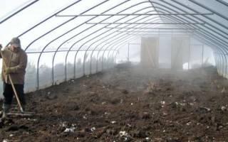 Чем обработать теплицу осенью от фитофторы?
